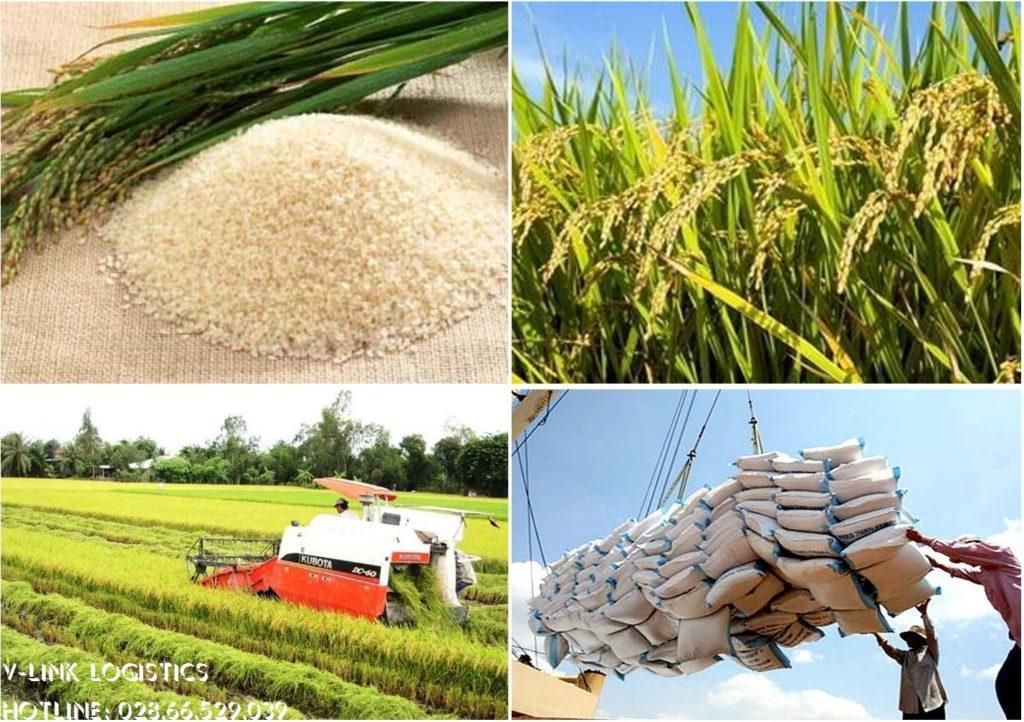 Thủ tục xuất khẩu gạo - V-Link Logistics