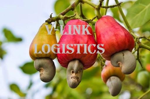 Thủ tục xuất khẩu hạt điều khô