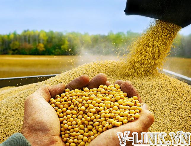 Thủ tục nhập khẩu đậu nành
